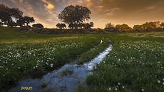 DSC_0129 (jaygum_photo) Tags: jaygum jaygumphoto alentejo primavera linda erva dourado