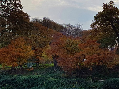 Autum colours are the best !!