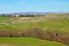 Paesaggio delle Crete Senesi (Darea62) Tags: cretesenesi tuscany nature hills trees mucigliani asciano toscana landscape paesaggio panorama country grass farm clay agriculture