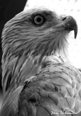 (166) Liberty's Owl Raptor & Reptile Centre