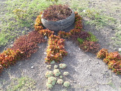 Flower beds (prondis_in_kenya) Tags: park flower youth bed kenya nairobi group jericho hotdryseason