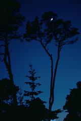 Shaken, Not Stirred (menegue) Tags: blue trees sky moon blur silhouette night 35mm dark blurry background slide 23 kodachrome ratio23