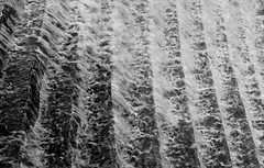 Cascade (Fanourios) Tags: morning light blackandwhite mist water river blackwhite low steps adelaide cascade blury torrens weir parklands x100 fujifilmx100 fujix100