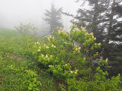 IMGPG15563 - Great Smoky Mountains National Park (David L. Black) Tags: nationalparks greatsmokymountainsnationalpark