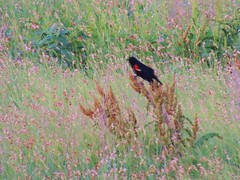 nature walk 039 (k8eknits) Tags: sunset bird oklahoma nature grasses plains preserve naturewalk