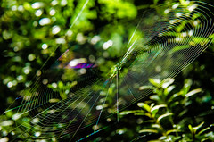 BG-1 (AZDenney) Tags: nature gardens spiders insects spiderwebs publicgardens arboretums conservtories