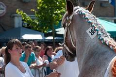 DSC_2430 (Ton van der Weerden) Tags: horses horse dutch de cheval belgian nederlands belges draft chevaux belgisch trait ijzendijke trekpaard trekpaarden