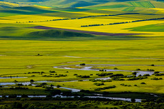 (zhouyousifang) Tags: china  grassland everglade   hulunbeier