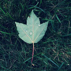 (Badison) Tags: green water grass portland leaf nike pdx worktrip iphone evergreencorporatebuilding