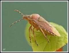 Bug_1024c (JPF Photos) Tags: macro nature closeup canon bug insect close natural 100mm insectes macrophotography macrophotographie