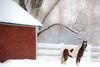 winterscape (Deb Ebbeling) Tags: berlin massachusetts snowscape january2009 walnuthillfarm