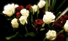 For you Mom (jayneboo - I'll be back soon) Tags: birthday flowers roses love mom lost memories remembrance missyou past