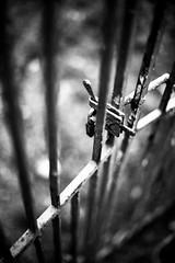 (Bruno Leonardelli) Tags: bw white black branco gate dof bokeh lock pb preto contraste cadeado tranca barreira