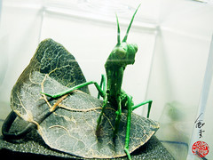 sipho mabona Praying Mantis (linny young origami) Tags: sipho mabona praying mantis origami