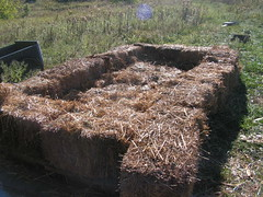 cold frame with straw (henna lion) Tags: autumn winter food cold fall season diy ic community joan straw soil frame trust land homestead growing extension sustainable fic strawbales primitive intentional shagbark 2013 kovatch joankovatch