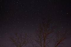 Starry night over Guelph Lake