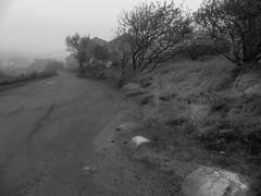 Main Street, Monhegan, Maine, Lumix FZ200, 10.7.13 (steve aimone) Tags: road blackandwhite monochrome island lumix blackwhite mainstreet maine monochromatic dirtroad monhegan roadway grays monheganisland midcoast lumixfz200