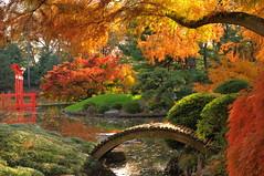 Koi Pond Colors (HorsePunchKid) Tags: brooklynbotanicgarden japanesehillandpondgarden bbgcalnovember bbgcalmaples bbgcalstructures bbgcalfall bbgselection jhpseries bbg2017october
