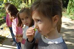 orvalle-2Prim-jardinbotanico (16)