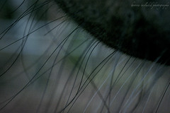 horse whiskers (Hooves Included Photography) Tags: horse bay whiskers equine misse warmblood 2013 winterwhiskers