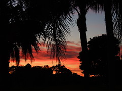 Sunrise and a cool 41 degrees (Jim Mullhaupt) Tags: morning pink blue trees winter red wallpaper sky orange color silhouette yellow night clouds sunrise landscape dawn cool flickr palm mullhaupt jimmullhaupt
