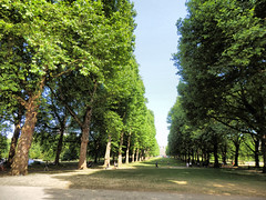 Green Park, London (photphobia) Tags: park uk london westminster vanishingpoint perspective greenpark 500views 500 royalpark buckingampalace 500999views