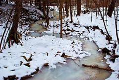 DSC_0628 (seanlynchh) Tags: new york winter lynch nature photoshop nikon sean adobe elements 200 18 suny tamron preserve binghamton d60