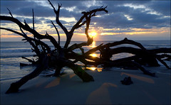 Sunrise On Point Jekyll Island (gatorgalpics) Tags: ga jekyllisland driftwoodbeach rootsbeach