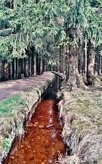 Am Dammgraben (HarzTobi) Tags: germany deutschland harz niedersachsen lowersaxony altenau oberharz dammgraben harztobi
