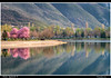 prunus tree (Andrea Ignjatovski ©) Tags: sky mountain lake reflection nature clouds landscape spring nikon macedonia hdr prunus prolet saray purpletree matka skopje treska d90 ezero nikkor80200f28 nikon80200f28 pejsaz hdrfromsingleraw andreaignjatovski ezercetreska