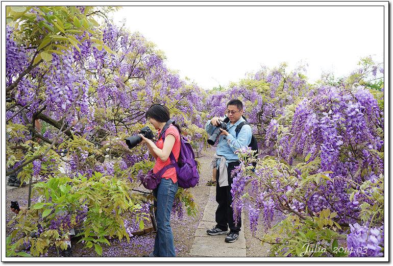 紫藤、老梅 (40)