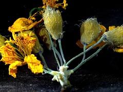Bouquet (domiloui) Tags: flowers france macro nature composition jardin panasonic lumiere technique lorraine campagne couleur plantes nuances lothringen cooliris nomeny abaucourt naturallive blinkagain