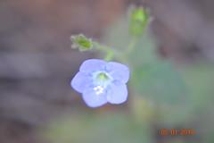 DSC_0252 (kazadmanesh) Tags: و بهار خشکسالی