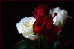 Painted Roses {Explored} (Garry9600) Tags: flowers roses canada art closeup lumix winnipeg manitoba explore 10000views cans2s fz200