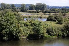 Beemden met grazende Konikpaarden bij Lixhe, (willem_huwae) Tags: canon bomen belgium gras gemeente luik plassen konikpaarden 50d lixhe beemden willemhuwae