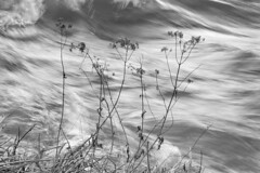 DSC_7823 (emilvlajic) Tags: twigs sprigs water wa waves unrest restlessness turmoil riot disturbance turbulence fragile breakable shivery