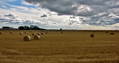 autumn rolls - rolos de outono (AnaValle) Tags: rolo paisagem outono nuvens palha