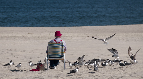 The Birdman of the Jersey Shore