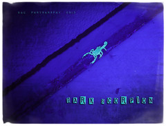 Bark Scorpion (B e e B e a r d) Tags: arizona glow uv az blacklight barkscorpion greenglow 15seconds dougcallow
