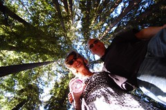 (mschout) Tags: california trees usa mike winery napa redwoods marcie reverie