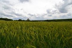 fields around Roly (Christophe Maerten) Tags: plant forest flora wheat national area veld arbre landschap roly namur wallonie graan wallonia gebied beschermd