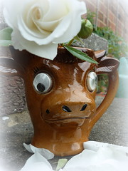 'How Now Brown Cow' brown (amy's antics) Tags: brown white rose cow petals eyes jug blanche 365d