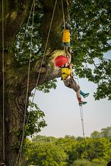 Cliffhanger_070713_0020 (Steve Bark) Tags: park uk boy tree climb fuji sheffield graves climbing event cliffhanger xpro1