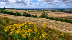 Ridge View (lincoln_eye) Tags: uk trees summer england grass clouds way countryside view unitedkingdom sunny august bluesky lincolnshire ridge gb fields crops viking hedges bracebridgeheath