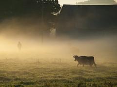 Leišmale. Rīts. IV (zigurdszakis) Tags: morning fog sunrise countryside latvia rīts latvija migla sēlija zemgale leišmale