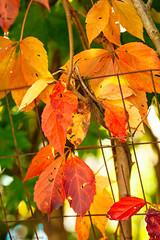 _MG_8962 (Bill Gagne Photography) Tags: autumn color colors canon bokeh fallcolors autumncolors canonef135mmf2lusm vsco billsphotos canoneos5dmkll vscopresets billgagnephotography