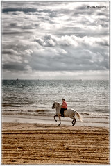Al trote (Leles14) Tags: sky valencia clouds caballo agua playa cielo nubes olas