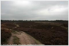 Gasterse Duinen | Dunes near Gasteren (Dit is Suzanne) Tags: autumn netherlands walk heather dunes herfst nederland pieterpad moor duinen heide drenthe wandeling gasteren   views200 img1289 etappe4  onderweginnederland ontheroadinthenetherlands ditissuzanne canoneos40d  gasterseduinen    20102013 zuidlarenrolde sigma18250mm13563hsm