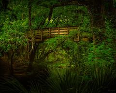 Suspension Bridge (josesuro) Tags: film tampa landscapes florida fineart velvia 4x5 largeformat hillsboroughriver 2013 fineartweb ebonysv45ti jaspcphotography josesuro