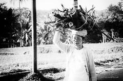 Reportaje Bali (Sergio Béjar) Tags: bali white black blanco rice negro ubud arroz tanalot klungkun